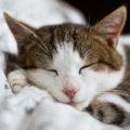 [iPhone] iPhoneのベッドタイム機能を利用して睡眠時間を確保する
